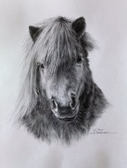 W.C. Pony